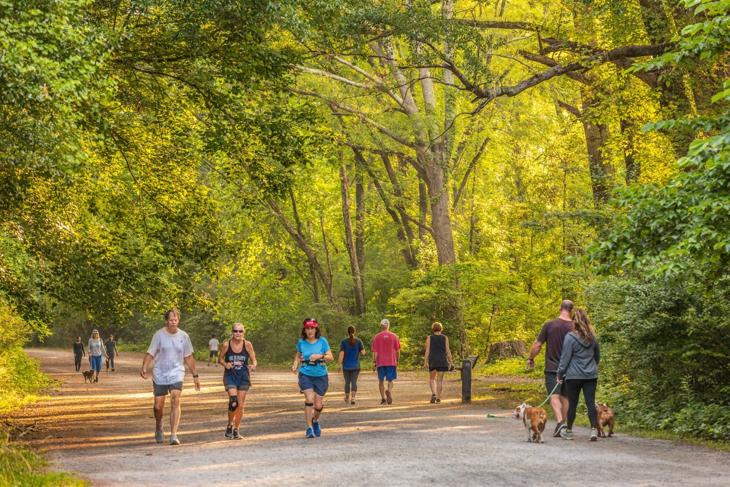 The Cochran Shoals loop offers views of the Chattahoochee River between the trees, while the wooded trails frequently cross creeks and traverse the rim of small valleys.
